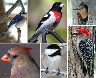 2009 Christmas Audubon Bird Count
