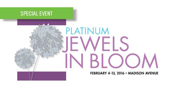 Platinum Jewels in Bloom