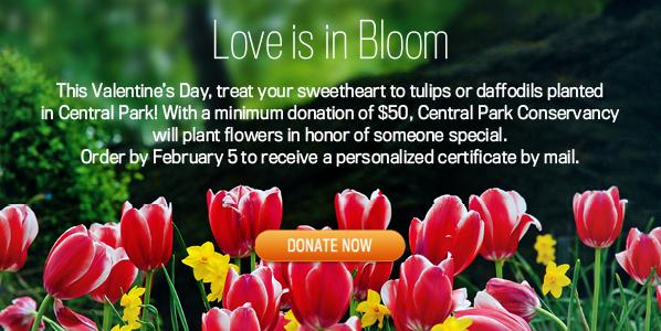 Love is in Bloom