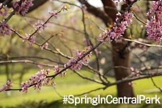 #SpringInCentralPark